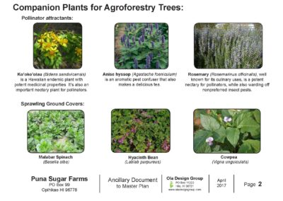 Puna Sugar Farms Companion Plants for Agroforestry Trees