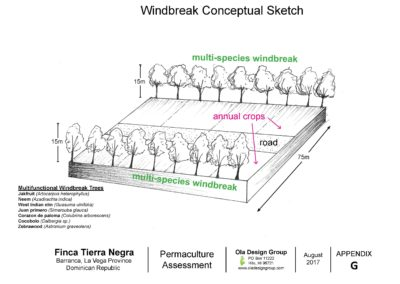 Tierra Negra Windbreak Conceptual Sketch